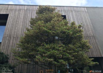 Moso Bamboo Varibo Gevelparket